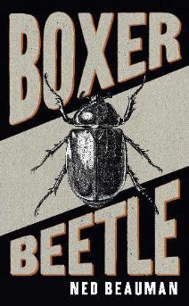 boxerbeetle